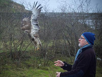 Foto: Släpp av ormvråk. Foto Anders