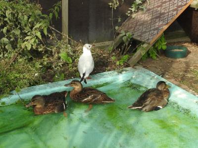 Några av parkfåglarna som vi lyckades få friska.